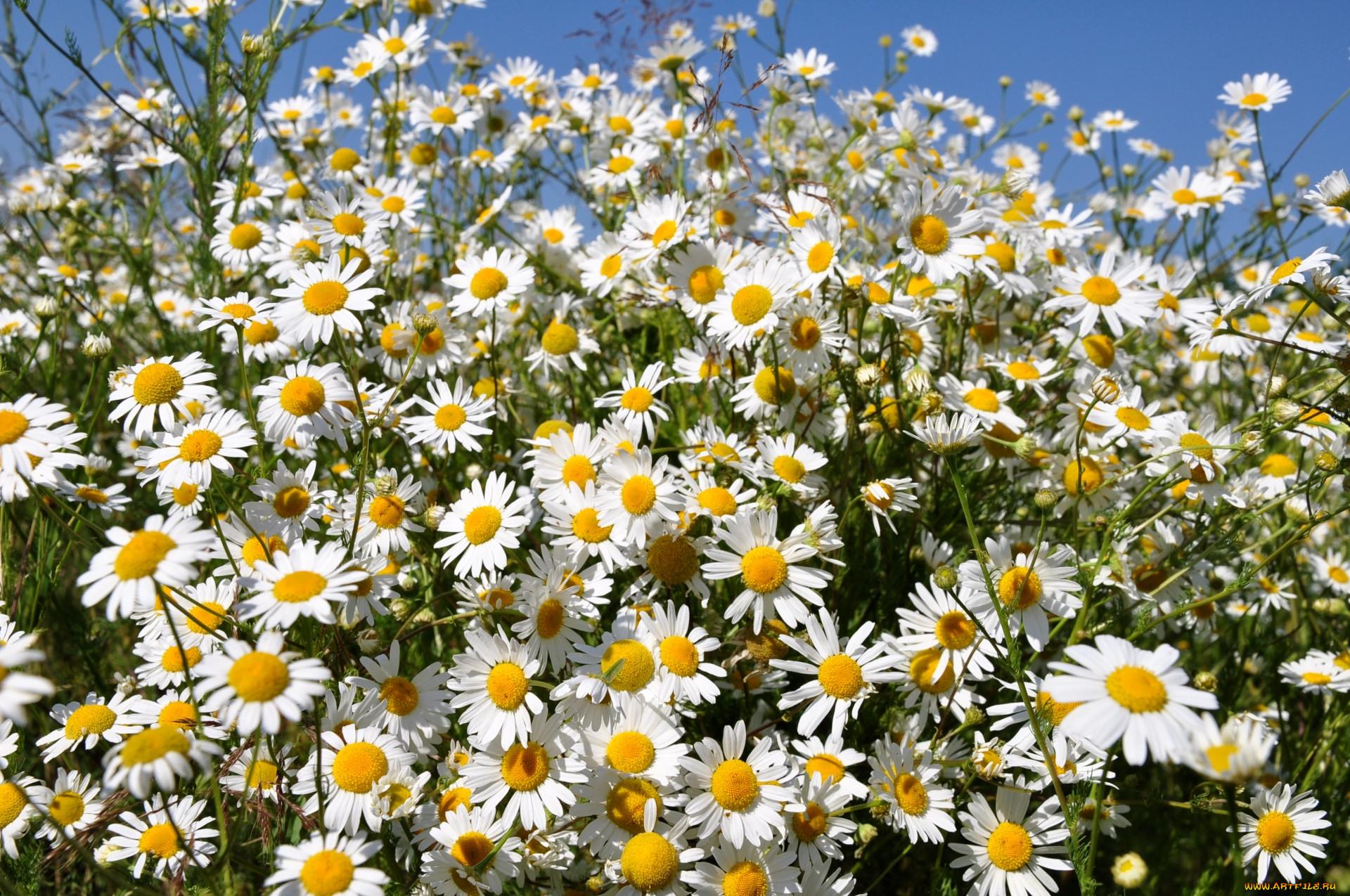 Картинки много цветов красивые новое время